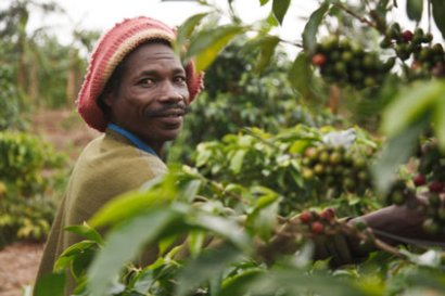 Farmers like the one pictured here benefit from Fairtrade's efforts (Photograph by Natalie Bertrams)